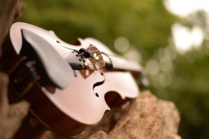 バイオリン。林試の森公園にて